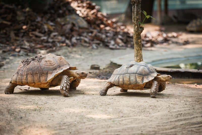 How Slow Is Too Slow In A Relationship
